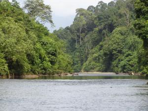 A view of the Besitang river