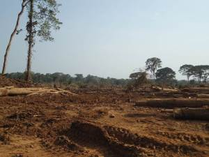Oil palm development in Africa